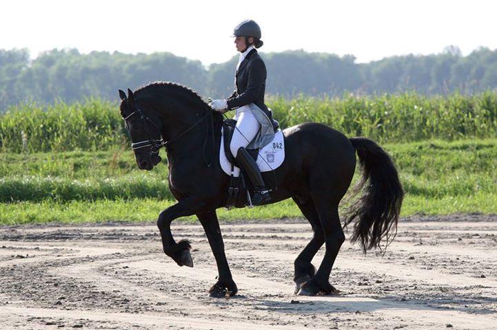 horseimage